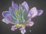 herbe-au-bitume-150x112