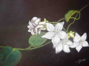 fleurs-de-Marie-1-300x225
