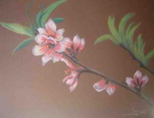 fleurs-de-cerisier-300x231