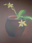 vieux-pot-de-grés-et-orchidées-112x150