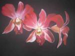 Orchidées-non-identifier-150x112