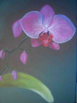 Phalaenopsis-rayé-ou-Vanda-112x150