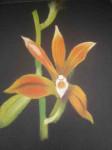 orchidée-inconnue-112x150