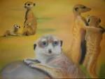surikat-par-cinq-150x112