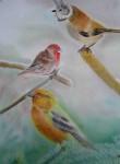 mesange-huppe-rouge-gorgebec-croise-des-sapins-110x150