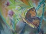papillon-dete-150x111