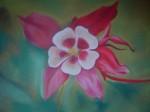 29pastel sur pastel card  aquilegia-rouge1-150x112