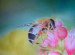 l-abeille-au-printemps-150x111