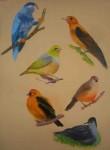 31 pastel mat oiseaux-de-tahiti-2-110x150