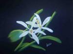 fleurs-de-vanille-150x112