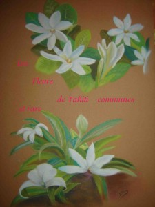les-fleurs-de-tahiti-commune-et-rare-225x300
